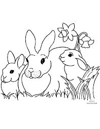 bunny rabbit daffodil