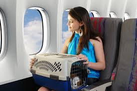 traveling with pets images Tips for air travel with pets pearls of travel wisdom jpg
