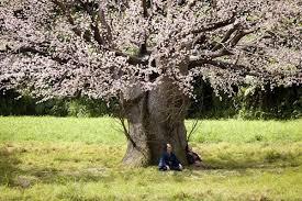 the lightning tree asianwiki
