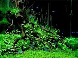 japanese aquascape images of aquascape tanks wallpaper sc