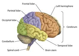 the human body and anatomy vocabulary learn english vocabulary