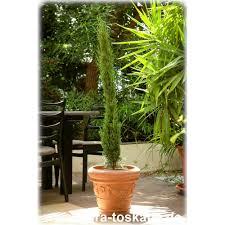 Tropische Pflanzen Im Garten Exotische Pflanzen Bestseller Im Garten Gepflanzt Flora Toskana