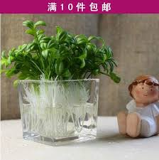 online cheap artificial plants artificial flower bean sprout small