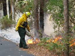 Florida Forest images Intentional fires stimulate environmental growth in alachua county jpg