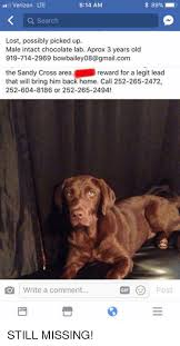 Chocolate Lab Meme - 25 best memes about chocolate lab chocolate lab memes