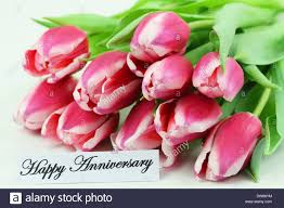happy anniversary cards happy anniversary card with pink tulips stock photo royalty free