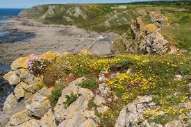 native uk plants buy british wildflowers u0026 seeds online habitat aid