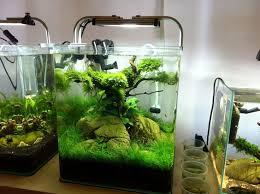 nano aquascape 30 liter nano aquarium aquascaping pinterest nano aquarium