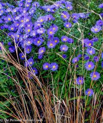 native plants portland oregon container plants fine foliage