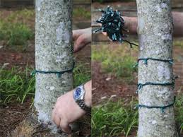 how to wrap a tree with lights lights etc