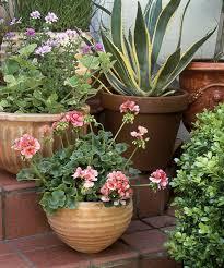 great patio pot plants ideas patio flower pot arrangements