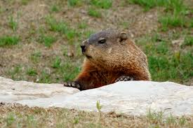 how to celebrate groundhog day without leaving pittsburgh