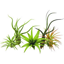 Best Plants For Living Room Amazon Com Fresh Flowers U0026 Live Indoor Plants Grocery U0026 Gourmet