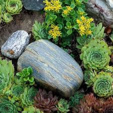 356 best garden rocks sand and plants that grow there images on