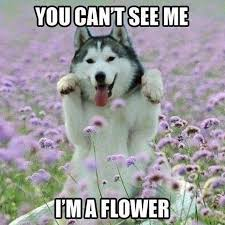Meme Wolf - image you cant see me funny wolf meme jpg animal jam clans