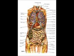 Human Anatomy And Physiology Courses Online Human Anatomy And Physiology Lindastorm Net