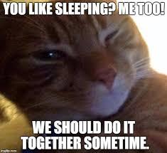 Flirtatious Memes - flirtatious cat meme generator imgflip