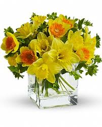 Flower Of The Month Meet March U0027s Flower Of The Month Daffodils