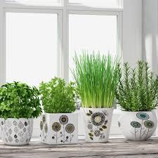 3d model herbs in pots cgtrader