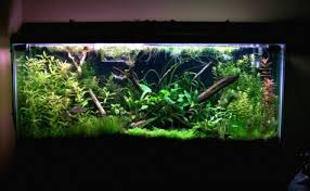 55 gallon aquarium light show me your 55 gallon planted tank page 2 fish pinterest 55