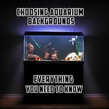 betta tankmates all aquarium info where to buy garra rufa