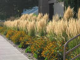 ornamental grasses are expected to continue to dominate in 2015