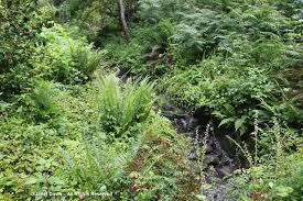 Botanical Gardens Ubc by Green As In Irish Green As In Garden Janet Davis Explores Colour