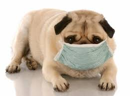 Great Tips for Controlling Your Pet Allergies Jasper, IN