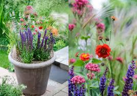 container gardening magazine subscription 1 digital issue zinio my