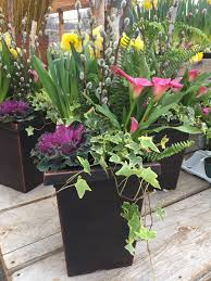 cool weather planters easy early color sunnyside gardens