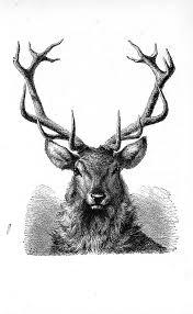 Stag Head Designs Best 25 Stag Tattoo Design Ideas On Pinterest Elk Tattoo Deer