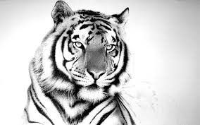 93 entries in tiger hd wallpapers group