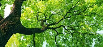 shop smart check for insurance when choosing an arborist
