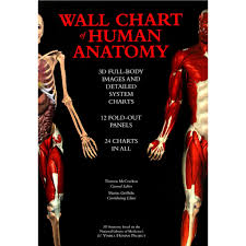 Human Anatomy Careers Chart Of Human Anatomy 1000 Images About Medical Careers On