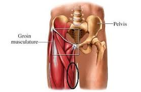 Back Knee Anatomy Lower Back And Inner Thigh Pain Injuries And Rehab Forums T
