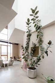 nicky zwaan and joris bouwers plants pinterest ficus