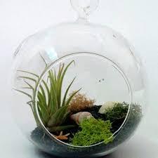 best glass terrarium kits products on wanelo