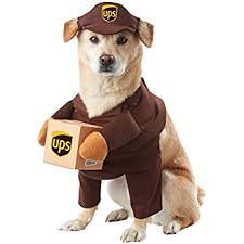 costumes for dogs rubies costume company construction worker pet costume