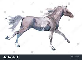 mustang horse drawing watercolor drawing jogging horse young mustang stock illustration