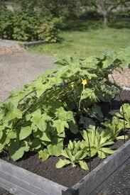 cucumber trellis 48