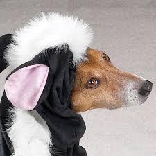White Dog Halloween Costume Lil U0027 Stinker Skunk Dog Halloween Costume Shipping