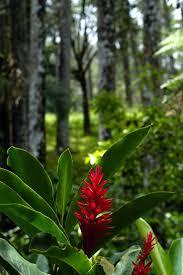 Dominican Republic Flag Tattoo 9 Best Flora Y Fauna De La Republica Dominicana Images On