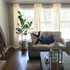 how to care for a fiddle leaf fig mindfully gray