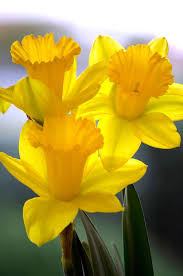 flowers images 558 best name that flower types of flowers images on pinterest