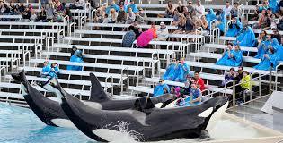 Sea World San Antonio Map by Seaworld San Diego U0027s Killer Whale Show Ends Sunday