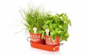 indoor outdoor herb garden ideas and equipment