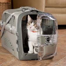 how to travel with a cat images How can you choose the perfect cat carrier life improvement jpg