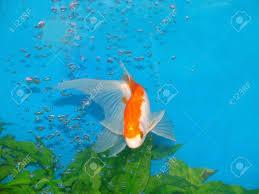 ornamental fisheries best fish 2017