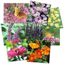 grow a butterfly garden gardening made easy
