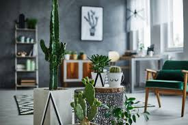 5 super low maintenance indoor succulents for your chill room goals